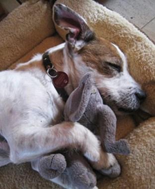 Haustierhaltung in der Mietwohnung: Hunde